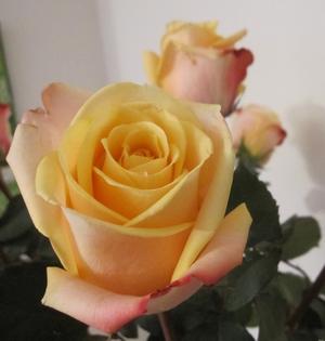 un petit bonheur des roses dans la maison filsetcrayons. Black Bedroom Furniture Sets. Home Design Ideas