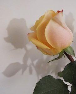 rose mariage2-inspiration